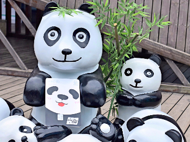 Panda-themed credit cards unveiled in Sichuan
