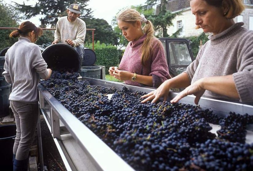 US threat to French wine receding, but not lifted: minister