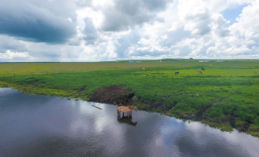 Stunning scenery after the rains at Hulunbuir Prairie in North China