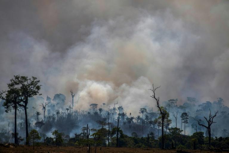 Brazil's burning ban takes effect as Amazon fires rage