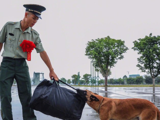 Police dog clings to veteran's baggage