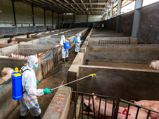 China toughens crackdown on illegal African swine fever vaccines