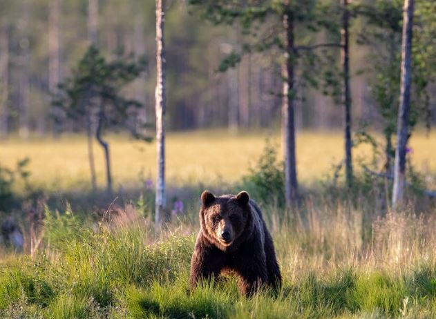 bear (agencies).jpg