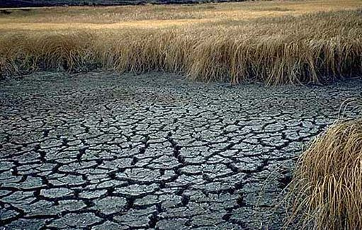 Emergency response activated for north China drought