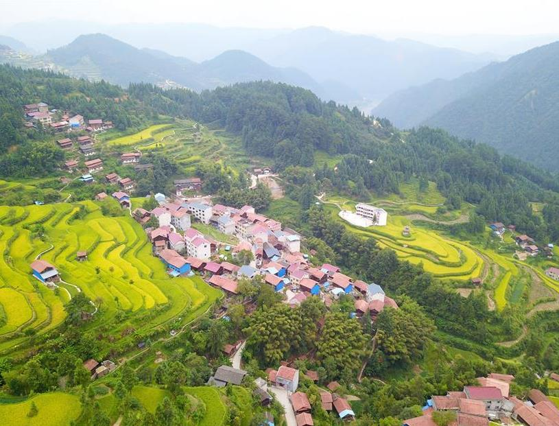 Scenery of terraced lands of paddy fields in Gaoniang Town, China's Guizhou