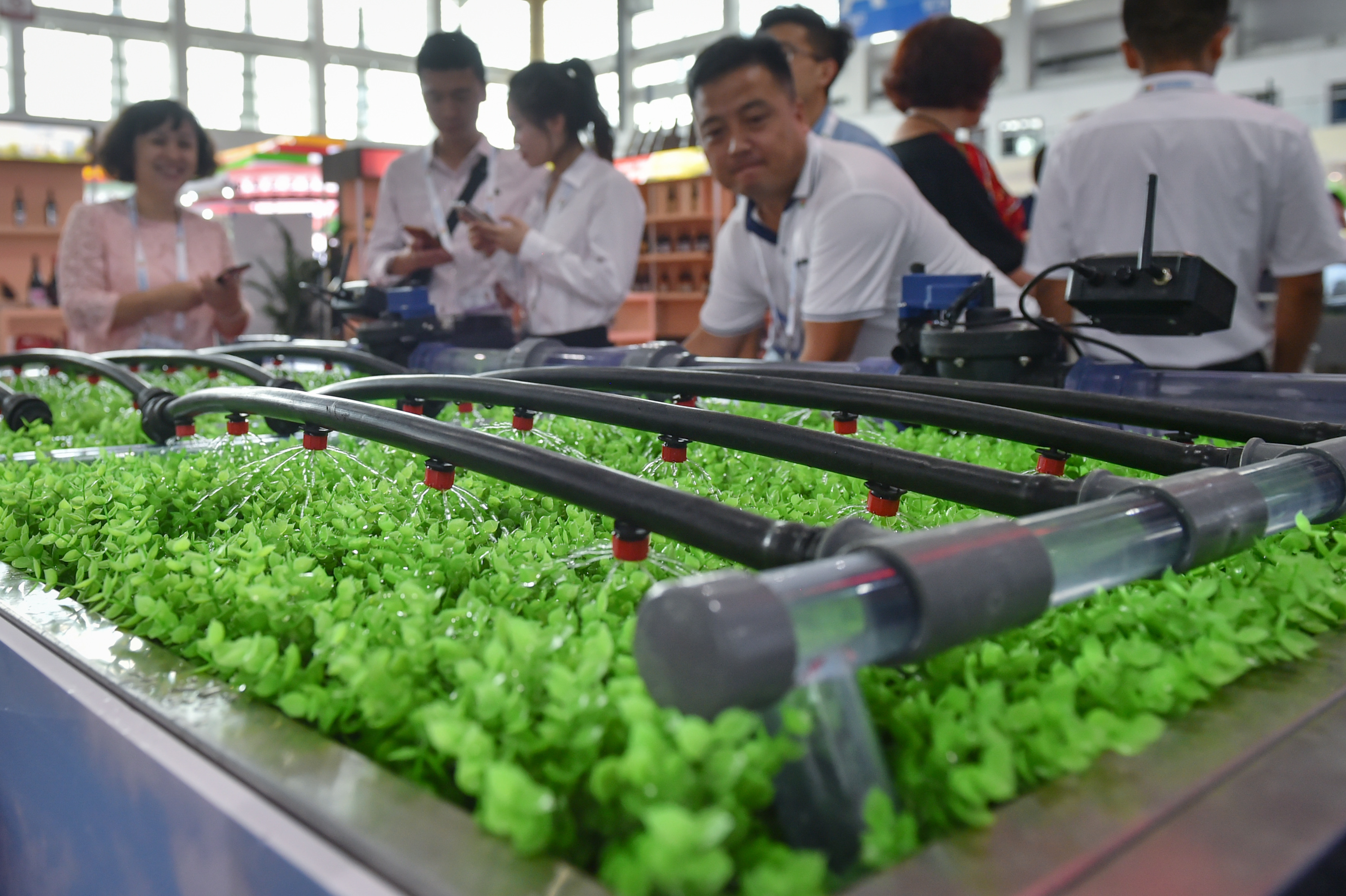 Agreements signed at China-Arab States expo to boost agri-technology transfer