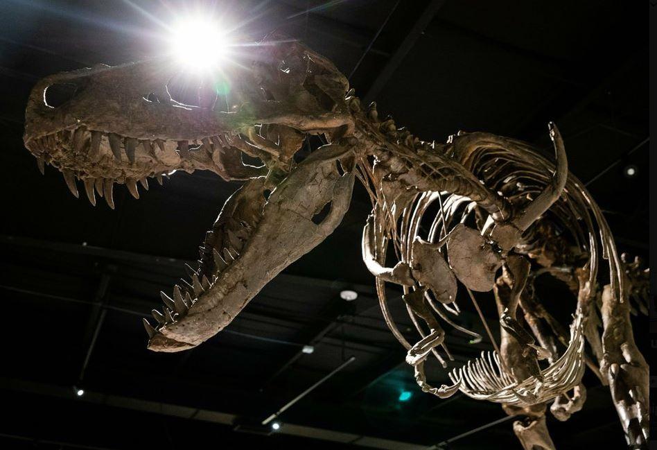 t-rex replica (ap).jpg