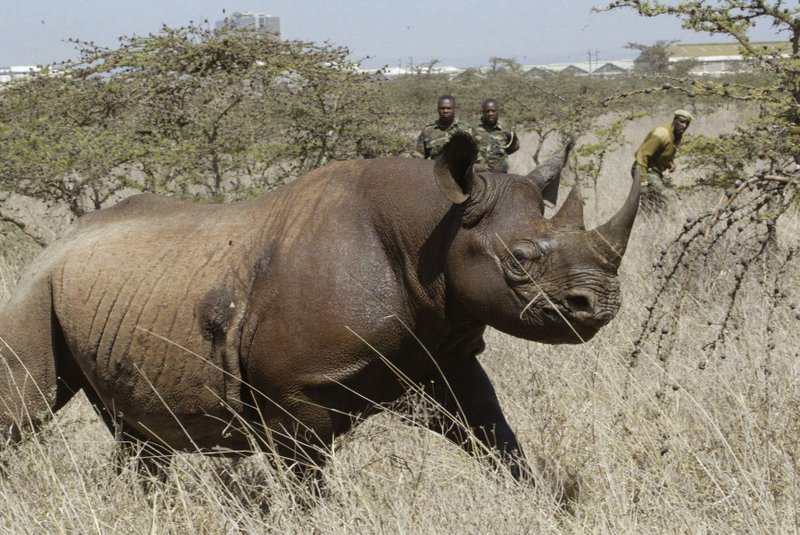 US to allow trophy hunter to import body of rare black rhino