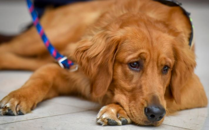 Mysterious disease killing dogs in Norway