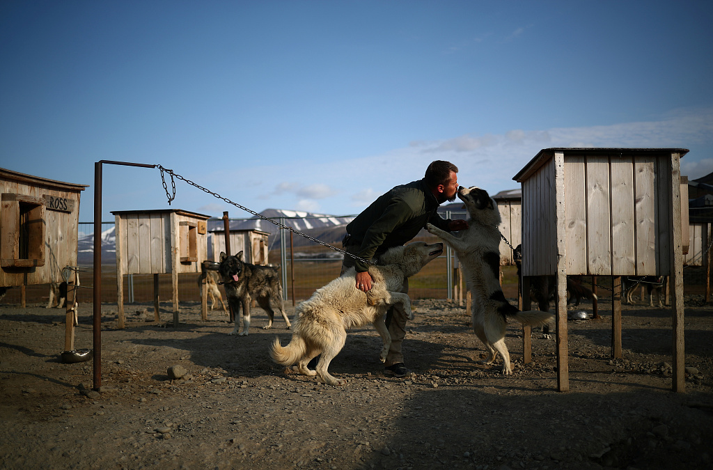 Dogs in Norway hit by mysterious illness