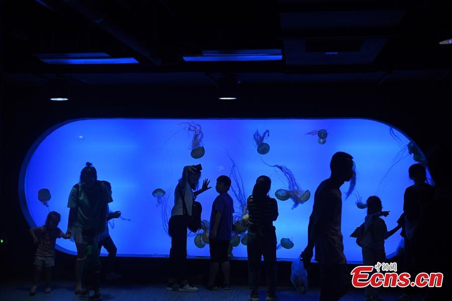 Colorful jellyfish world in Chongqing park