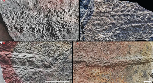Oldest evidence of animal mobility unearthed in Central China