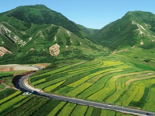 Ningxia makes headway in reversing desertification