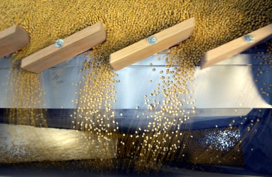 soybean bean.jpeg