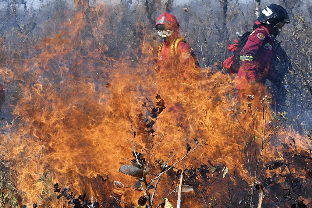 Forest fires destroy 2.4 mln hectares in Bolivia
