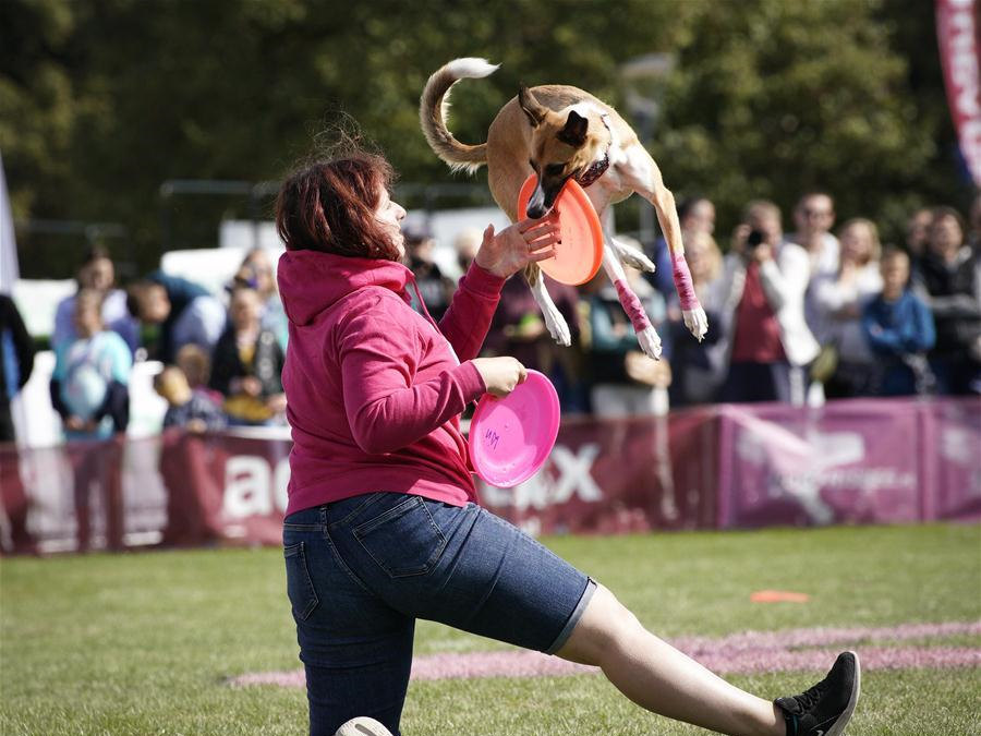 Flying Dogs competition held in Warsaw, Poland