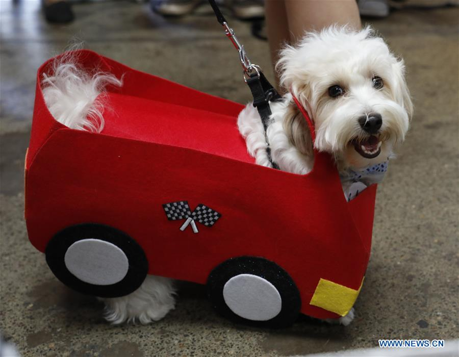 Highlights of pet dog competition in San Francisco, U.S.