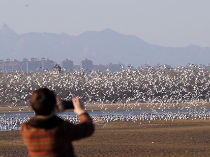 Wetland becomes more habitable place for birds