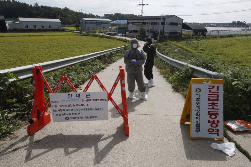 South Korea reports 2 more suspected swine fever cases