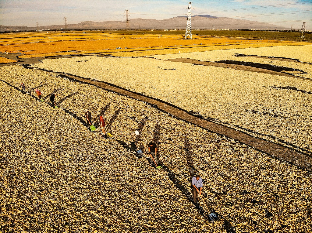 China to see bumper harvest of grains