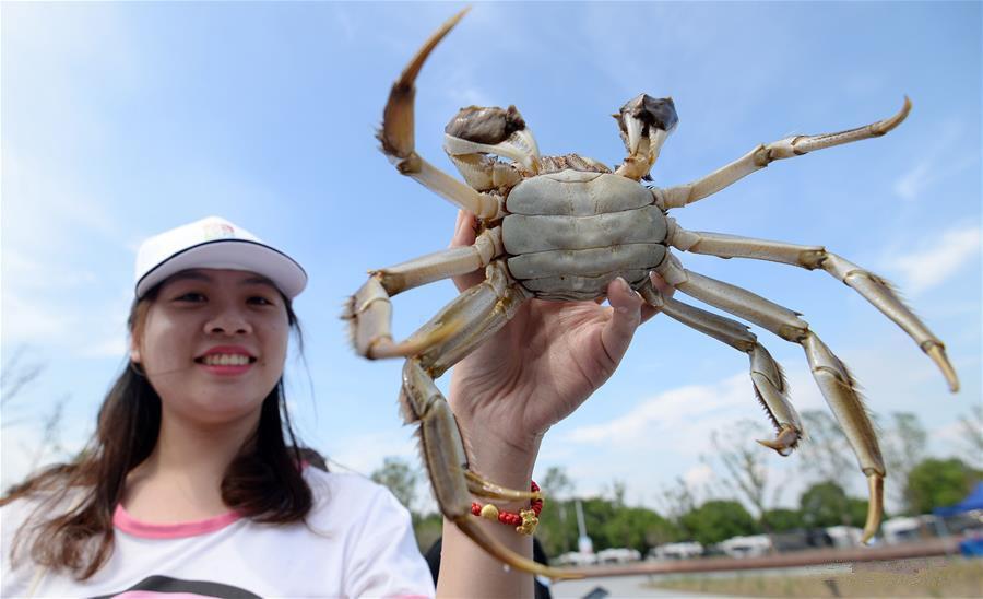 Crab season opens on China's Yangcheng Lake