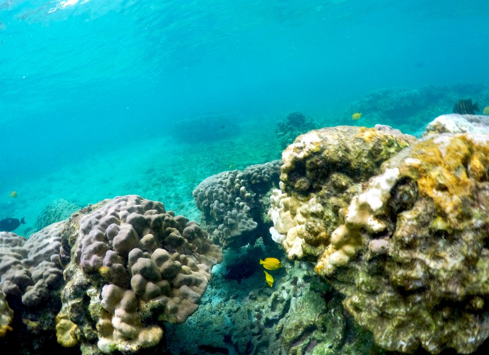 Pacific heat wave threatens Hawaii's iconic coral reefs