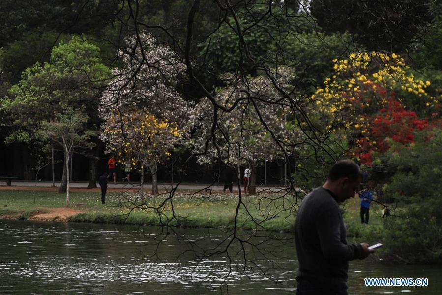 Trees blossom in Sao Paulo, Brazil