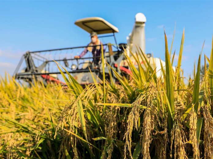 China makes great strides in agriculture, poverty reduction over 70 years: officials