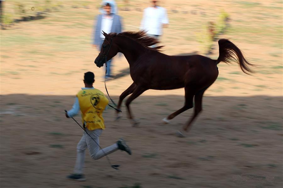Sharkia Arabian Horse Festival held in Egypt