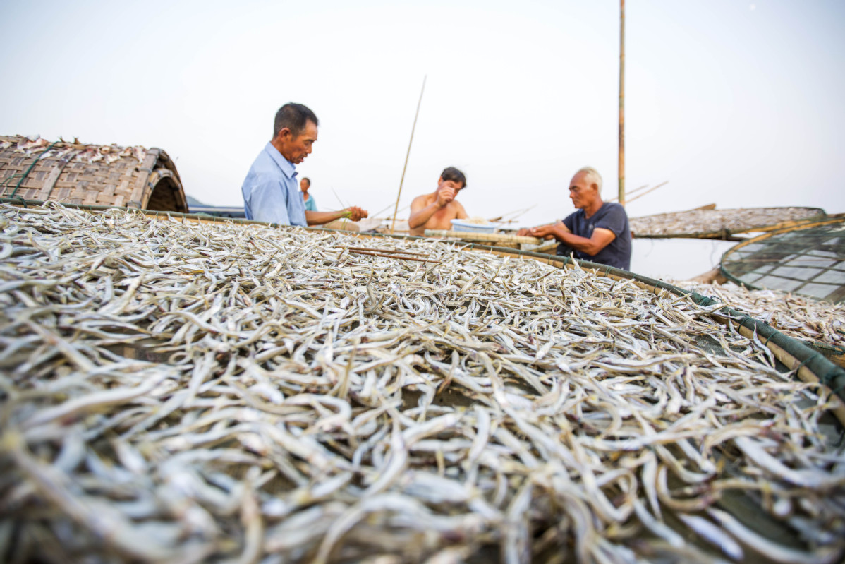China launches project to foster fish gene research