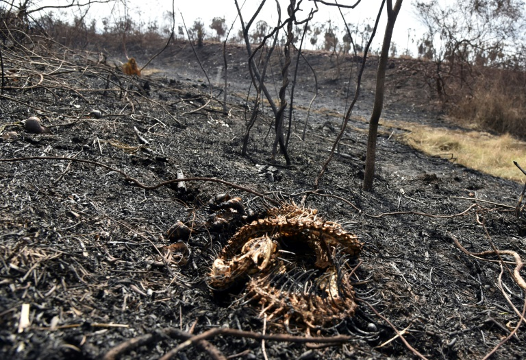 More than 2 million animals perish in Bolivia wildfires