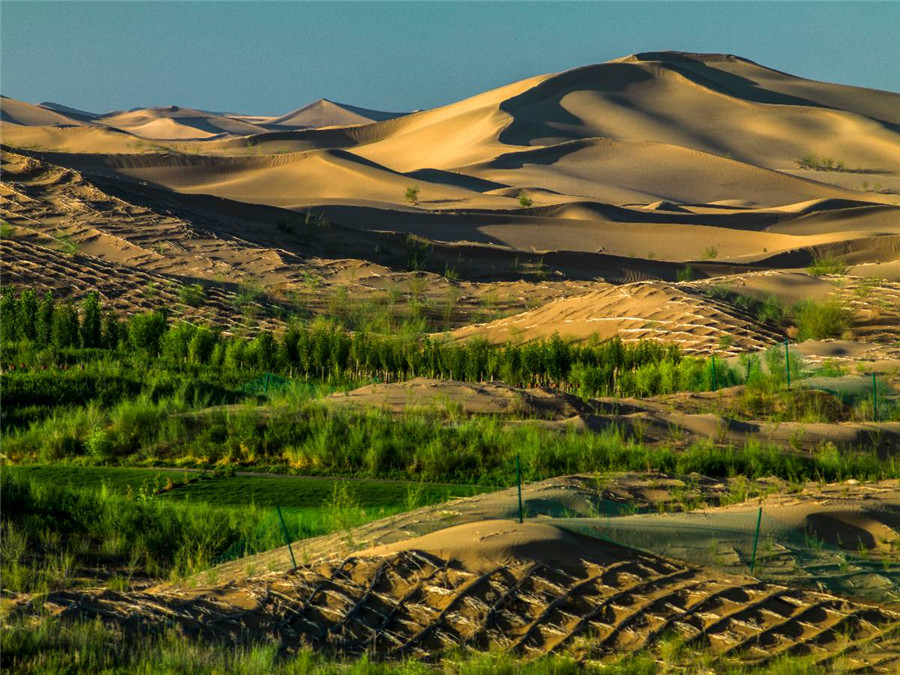 Inner Mongolia to spur innovation in efforts to combat desertification