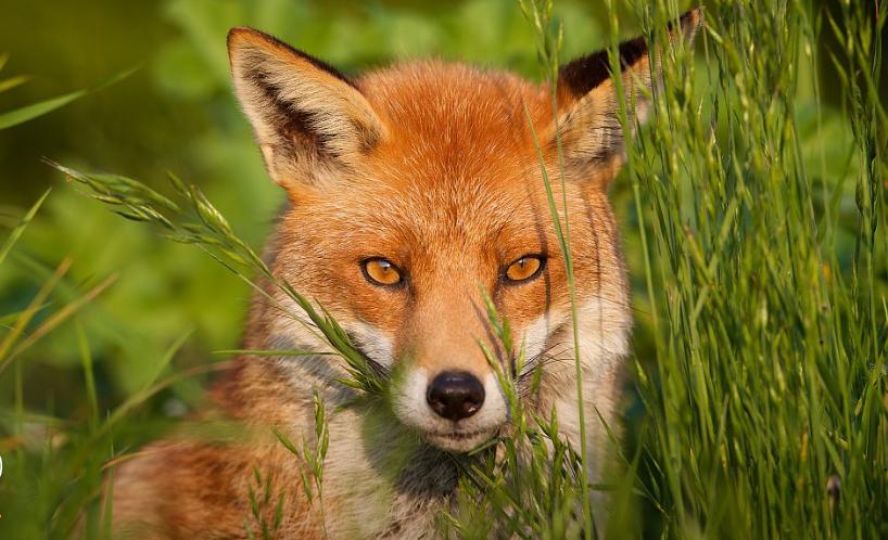 Good News! Wild animals return to national nature reserve in NE China