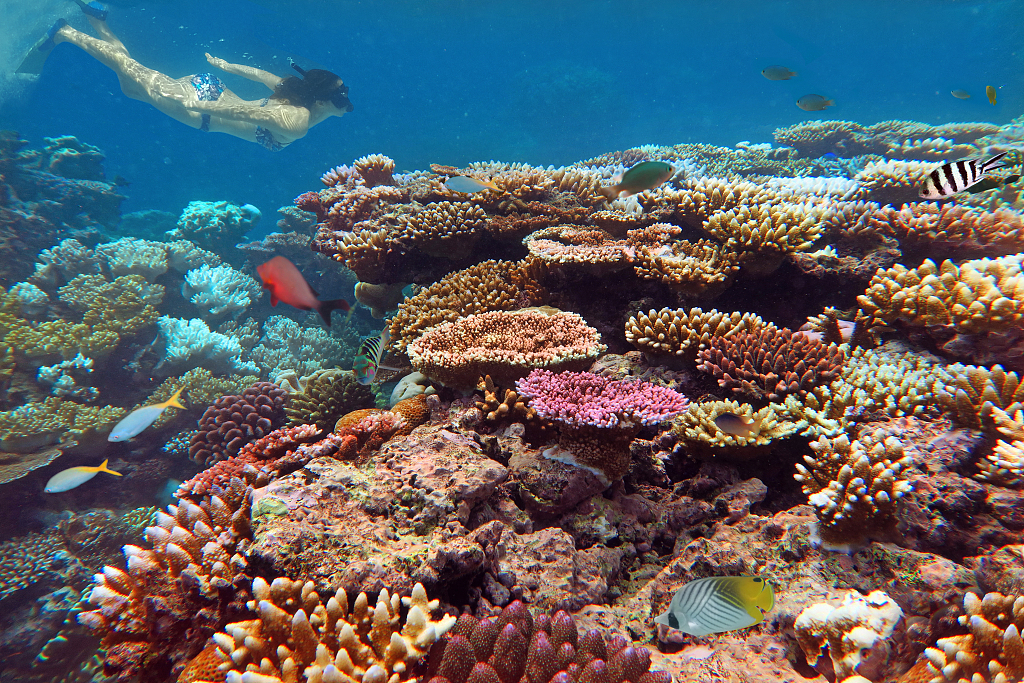 Israeli research reveals alarming changes in world's largest coral reef