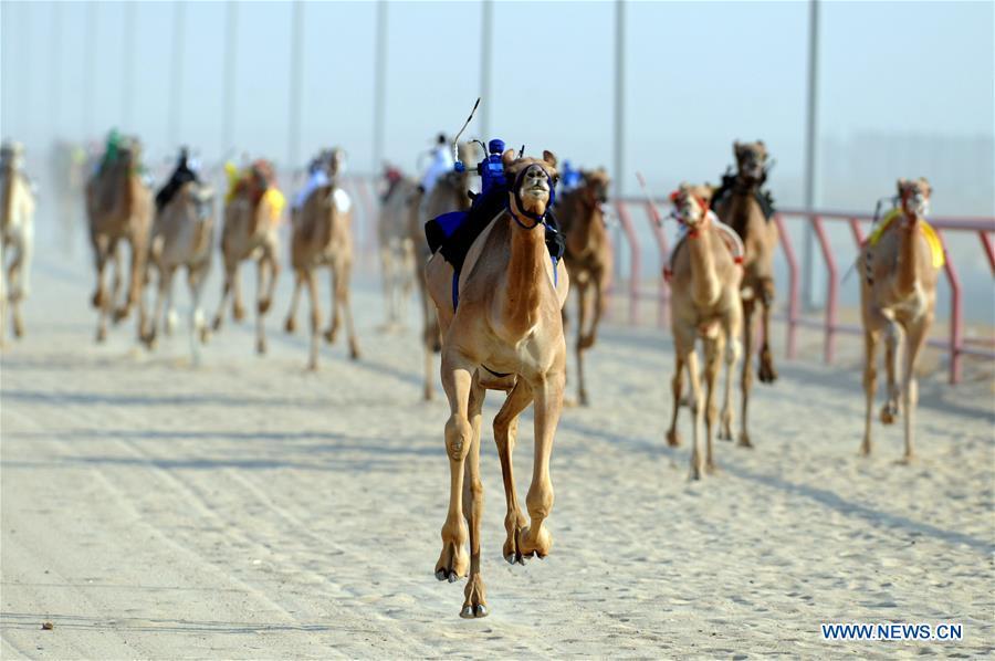 Camel race held in Al Ahmadi Governorate, Kuwait