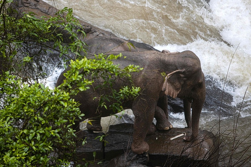 Six wild elephants drown after slipping off waterfall in Thai park