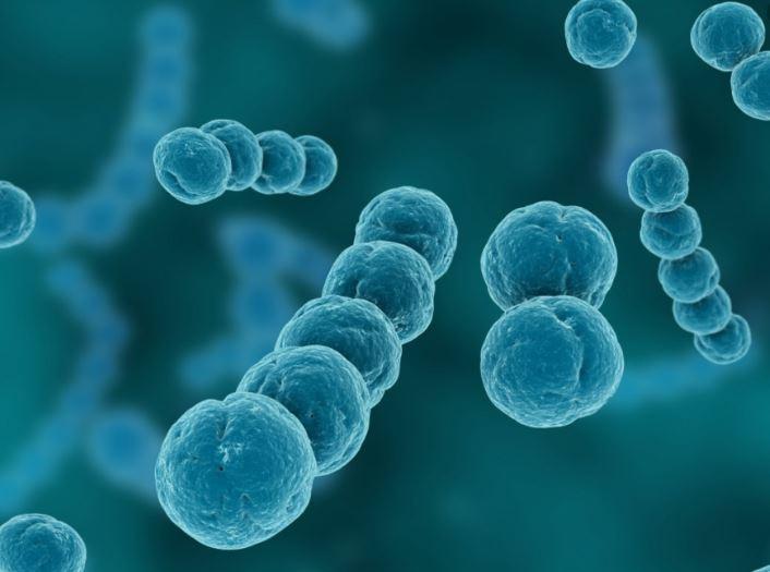 infectious diseases (ap).jpg