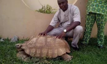 old tortoise (xinhua).jpg