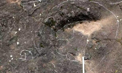 Rare dinosaur footprints discovered in East China