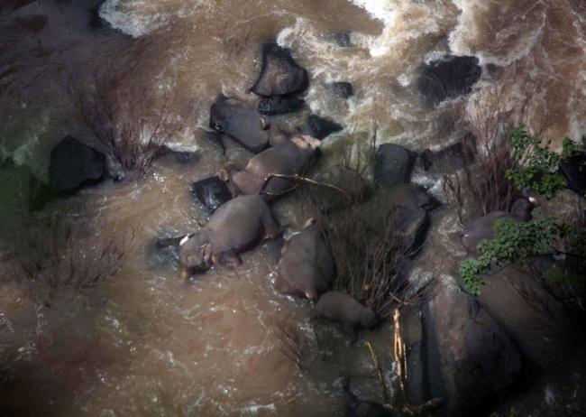 5 more elephants found dead in Thai waterfall ravine