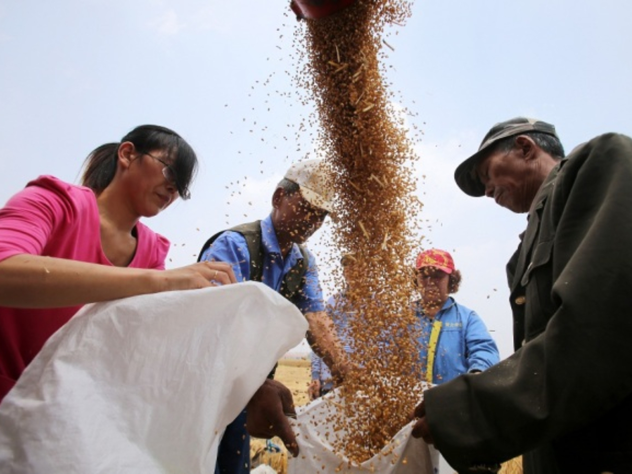 China to lift 95 pct of poor population out of poverty by year-end