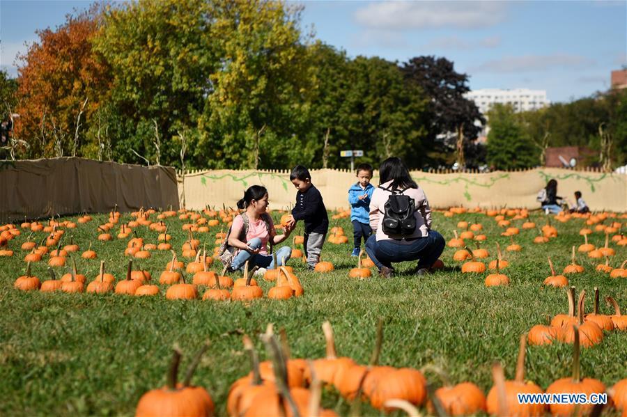 Pumpkin patch activities held to celebrate autumn harvest in New York