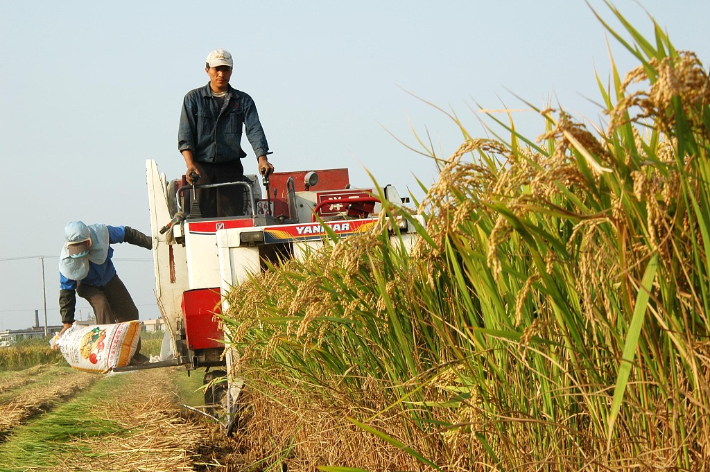 China releases white paper on food security
