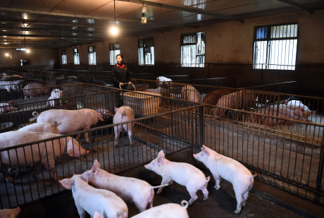 China reports new case of African swine fever