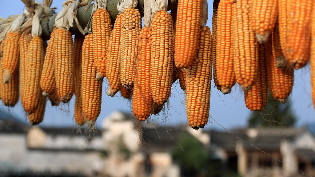 Food security in China in the new era