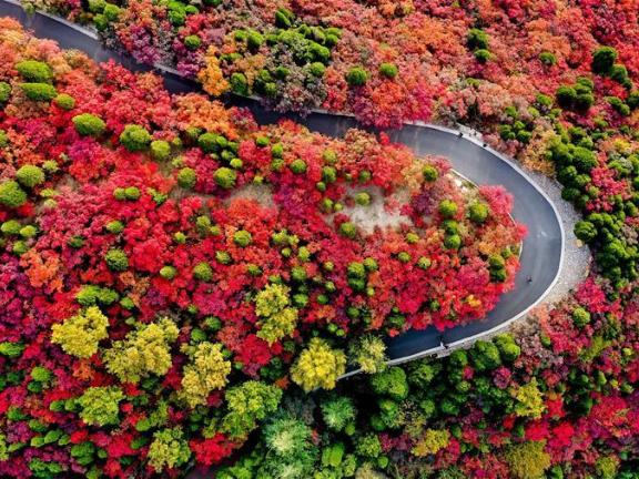 Scenery of Hongyegu scenic spot in Jinan