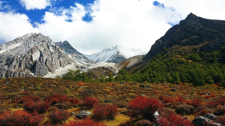 China's plateau province records 1,340 medicinal plants