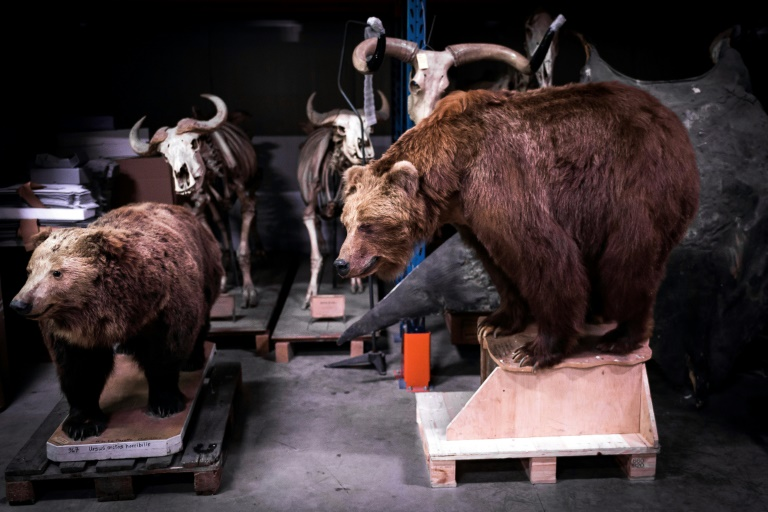 Male specimens preferred by animal collectors, study suggests