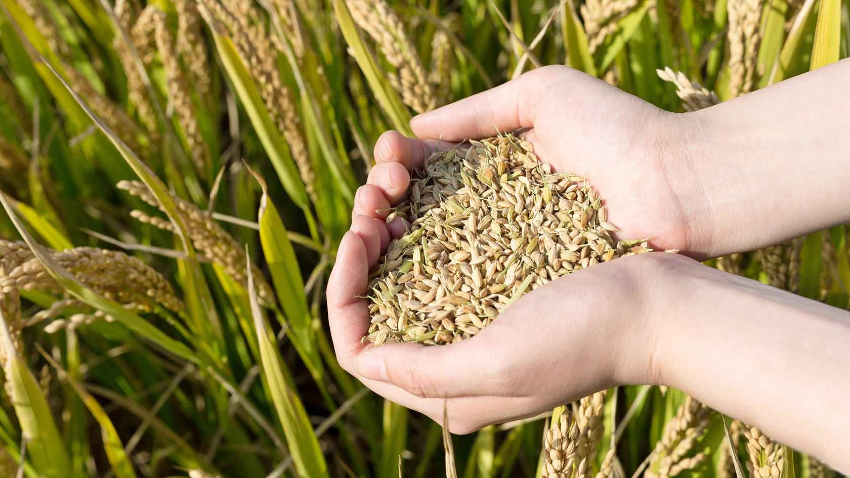 China's agriculture expands steadily