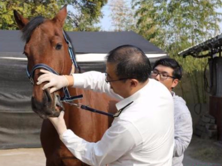 Race horses imported from Hungary arrive in Shanghai